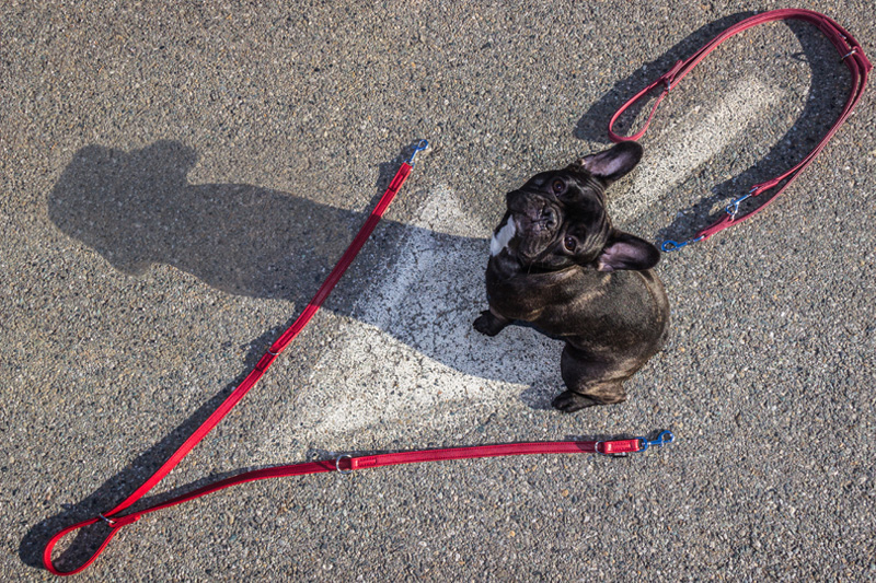 Dog Leashes - The Work Leash