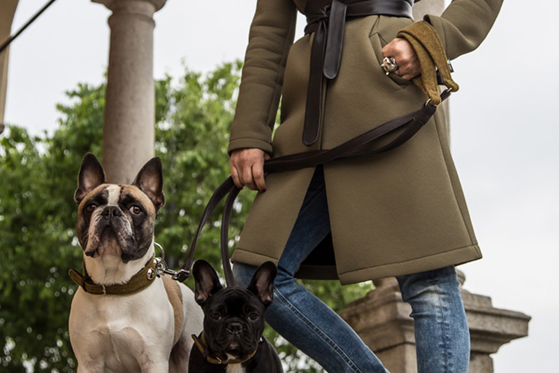 Dog Leashes - The Leash for the Boss