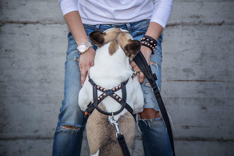 Dog Harnesses - Fashion Link