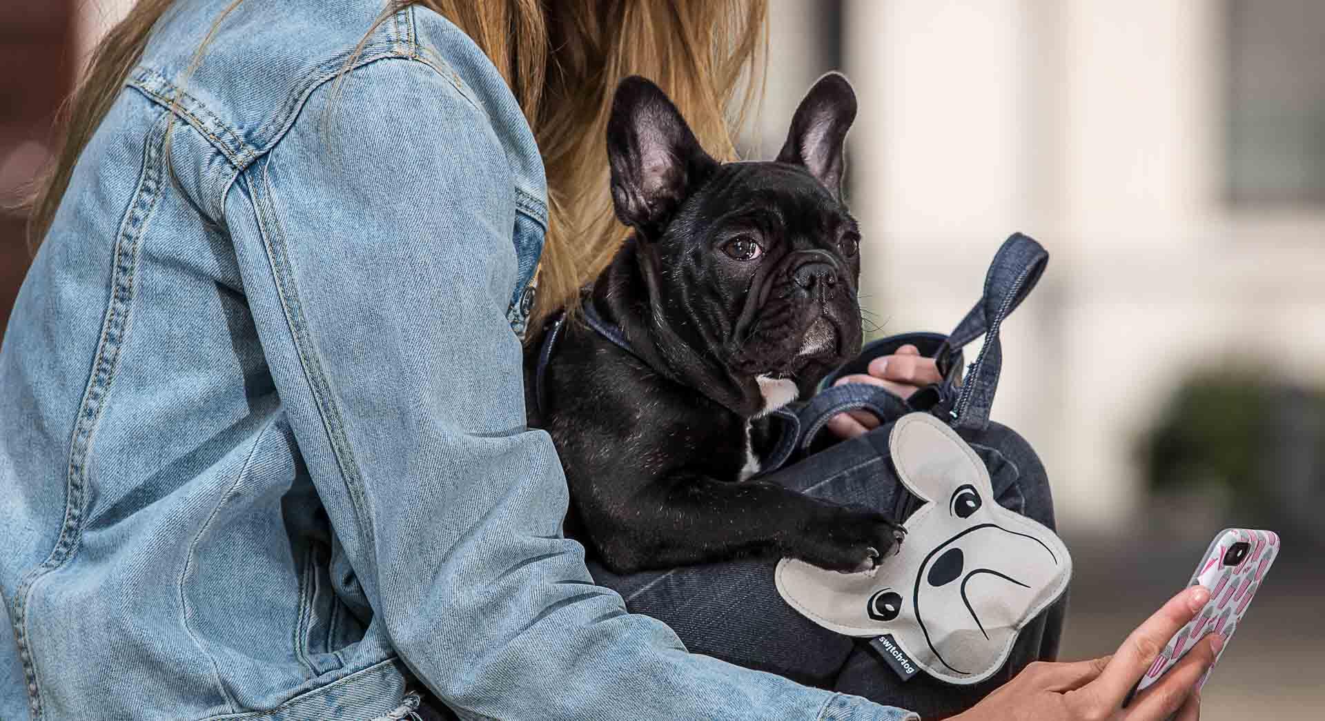 Guinzagli collari e pettorine di lusso per cani switchdog for Nomi per cani taglia piccola