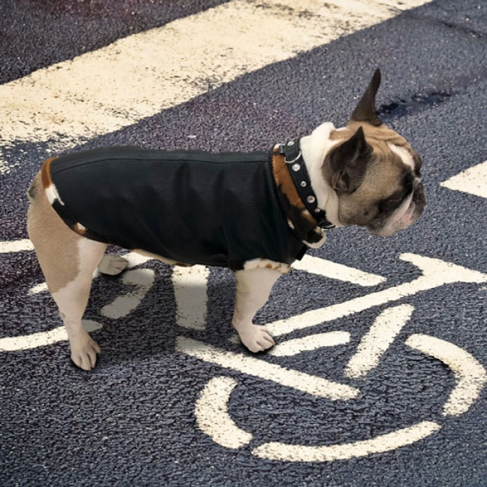 cappottini-per-cani-bully-jacket